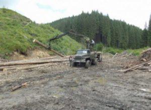 В сети показали вырубку леса в Карпатах: пользователи в шоке