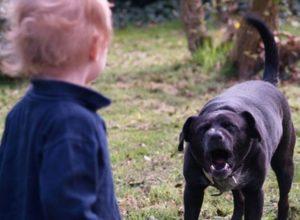 """""""Поблизу під'їзду""""! У Миколаєві бродячий собака вчепився в обличчя 4-річної дитини!"""