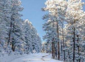 Метеорологи шокировали прогнозом на предстоящую зиму