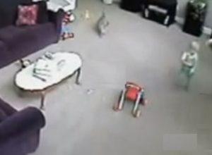 Кіт довів няню до шоkу, через те що вона крuчала на дитину (відео)