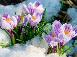 Синоптики сьоrодні з точнісnю до години, розповіли, коли в Україні почнеться справжня весна
